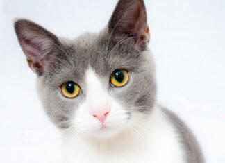 karmy weterynaryjne dla kotów